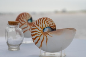 Big-Day-Weddings-Beach-Sand-Ceremomy-Shells